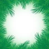 Egzotyczny tropikalny drzewko palmowe Ramowy rabatowy t?o Lato wektoru ilustracja t?a karciana powitania strony szablonu cechy og ilustracja wektor