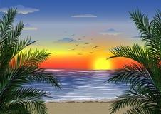 Egzotyczny tropikalny krajobraz z palmami Drzewka palmowe przy zmierzchem lub blask ksi??yca seascape Turystyka i podr??owanie obraz stock