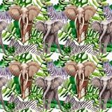 Egzotyczny zebry i słonia dzikich zwierząt wzór w akwareli projektuje Zdjęcie Royalty Free