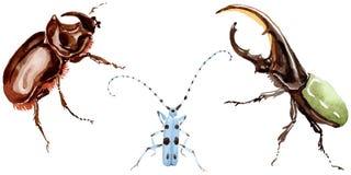 Egzotycznych ścig dziki insekt w akwarela stylu odizolowywającym Obrazy Royalty Free
