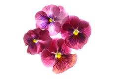 egzotycznych kwiatów Zdjęcia Royalty Free