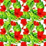 egzotycznych kwiatów Akwarela bezszwowy wzór Fotografia Royalty Free