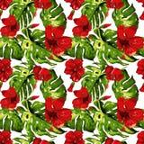 egzotycznych kwiatów Akwarela bezszwowy wzór Fotografia Stock