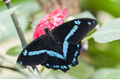 egzotycznych motyli Fotografia Stock