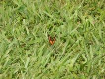 egzotycznych motyli Obrazy Stock