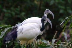 egzotycznych ptaków Zdjęcia Stock