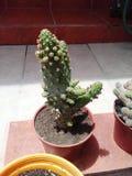 Egzotycznych rośliien agawy kaktusowy ogród Obraz Royalty Free