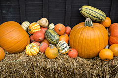 EH1_5674. Autumn decor. Pumpkins, squash, gourds, and hay against dark wooden barn board, arranged in a pleasing fall outdoor display stock photography