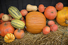 EH1_5670. Autumn decor. Pumpkins, squash, gourds, and hay against dark wooden barn board, arranged in a pleasing fall outdoor display stock image