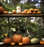 EH1_5592. Autumn decor in a woodland setting. Pumpkins, squash, gourds, arranged in a fall outdoor display royalty free stock photos