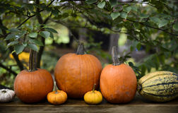EH1_5593. Autumn decor in a woodland setting. Pumpkins, squash, gourds, arranged in a fall outdoor display royalty free stock image