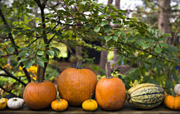EH1_5595. Autumn decor in a woodland setting. Pumpkins, squash, gourds, arranged in a fall outdoor display stock images