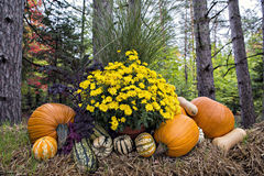 EH1_5697. Autumn decor in a woodland setting. Pumpkins, squash, gourds, chrysanthemums, hay, and juniper bushes arranged in a fall outdoor display stock photos