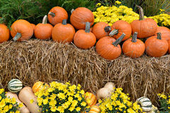 Autumn Decor on Hay Bales. Autumn decor in a woodland setting. Pumpkins, squash, gourds, chrysanthemums, hay, and juniper bushes arranged in a fall outdoor royalty free stock photography