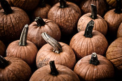 EH1_5641. Beautiful harvest vegetables. Freshly picked large orange pumpkins arranged neatly side by side. A great background image. Nostalgic processing stock images