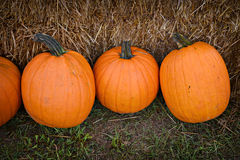 EH1_5623. Large Pumpkins against a backdrop of hay royalty free stock image