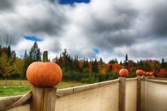 EH1_5625. A Pumpkin on a fence post with an autumnal forest scene in the background with a blue sky and clouds royalty free stock photos
