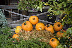 EH1_5662. Pumpkins, chrysanthemums, and evergreens arranged in a fall outdoor display against a backdrop of a vintage weathered porch royalty free stock photos