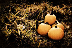 EH1_5626. Pumpkins in field. Low key tinted processing for a dark and moody feel royalty free stock photos