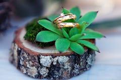 Ehering, der auf Succulent legt Schöne Goldeheringe mit Diamanten Stockbild