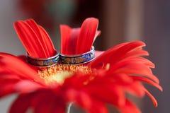Eheringe angeschmiegt in roten Gerber-Gänseblümchen Hochzeitsringe auf den Blumen Stockfoto
