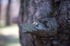 Eheringe auf einer Baumrinde Stockfotos