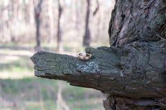 Eheringe auf einer Baumrinde Stockbilder