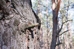 Eheringe auf einer Baumrinde Lizenzfreies Stockfoto