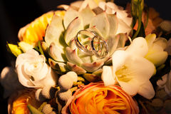 Eheringe auf Succulents Stockbild