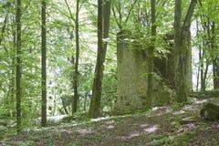 Ehrenfels城堡废墟 库存图片