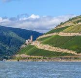 Ehrenfels castle in the vineyards Stock Images