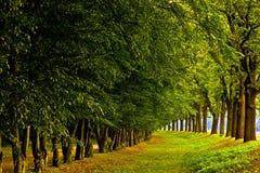 Ehrfürchtige Bäume Stockbild