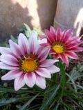 Ehrfürchtige Blume stockbild