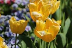 Ehrfürchtige Blume Stockbilder