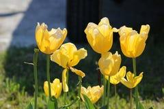Ehrfürchtige Blume Lizenzfreie Stockfotografie