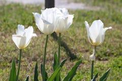 Ehrfürchtige Blume Lizenzfreies Stockfoto