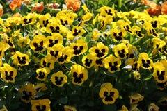 Ehrfürchtige Blume Stockfoto