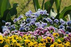 Ehrfürchtige Blume Lizenzfreie Stockbilder