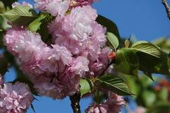 Ehrfürchtige Blume Lizenzfreie Stockfotos