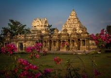 Ehrfürchtige Blume geschossen vom kailasanadhar Tempel Stockbild