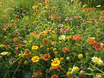 Ehrfürchtige Blumen Lizenzfreie Stockfotografie