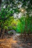 Ehrfürchtige Sonnenstrahlen im Wald lizenzfreies stockbild