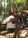 Ehrfürchtiger Bungalow und Hotel und Erholungsort im Dschungel stockfotos