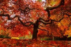 Ehrfürchtiger Herbst lizenzfreie stockfotos