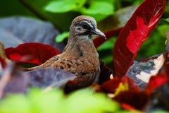 Ehrfürchtiger, schöner u. kleiner Vogel Stockbild