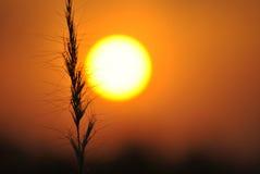 Ehrfürchtiger Sonnenuntergang Lizenzfreies Stockbild
