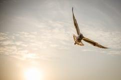Ehrfürchtiger Vogel mit Sonnenuntergang Lizenzfreie Stockfotografie