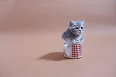 Ehrfürchtiges Kätzchen in einem Becher Lizenzfreie Stockfotos