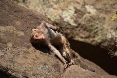 Ehrfürchtiges Schauen eines Affen, der nahe einem Wasserpool spielt Er haftet auf großem geradem Stein an, nachdem er Bad u. dort Stockbilder