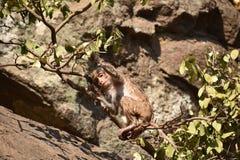 Ehrfürchtiges Schauen eines Affen, der nahe einem Wasserpool spielt Er haftet auf großem geradem Stein an, nachdem er Bad u. dort Lizenzfreie Stockbilder